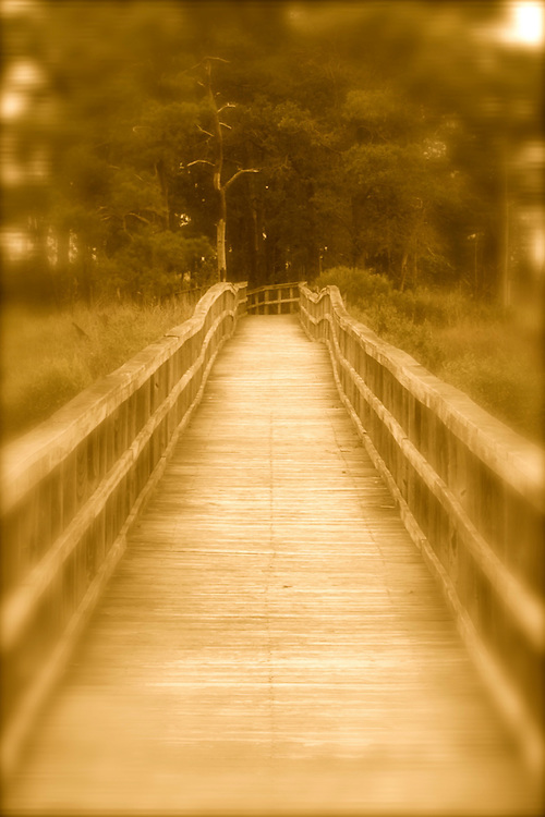 Walkway to woods on Maryland's Eastern Shore