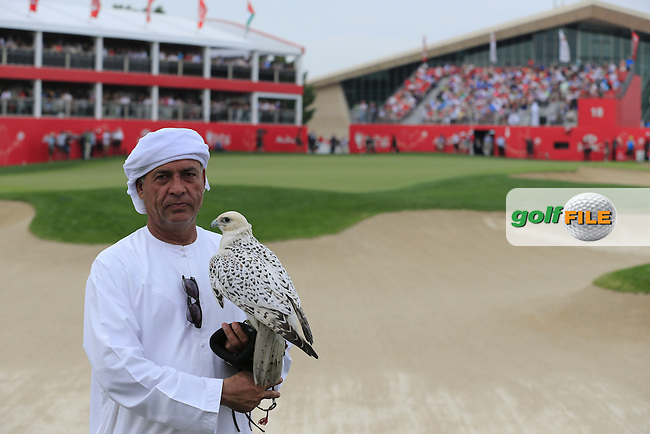 Bird of prey at the 18th green during Sunday's Final Round of the Abu Dhabi HSBC Golf Championship 2015 held at the Abu Dhabi Golf Course, United Arab Emirates. 18th January 2015.<br /> Picture: Eoin Clarke www.golffile.ie
