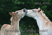 Bob, ANIMALS, REALISTISCHE TIERE, ANIMALES REALISTICOS, horses, photos+++++,GBLA4055,#a#, EVERYDAY