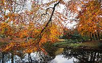 Rotterdam- Herfst in Het Park