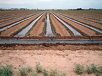 IRRIGATION: PEANUT FARM<br />