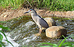 heron stands motionless in a river or stream waiting for fish to swim by for a meal
