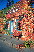 Antique shop encased in autumn touched vine leaves.  Minnetonka Minnesota USA