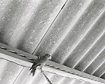 August, 2005. A parrot in the rafters. The surfing village of Troncones, in Guerro, Mexico.