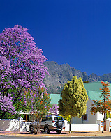 "South Africa, near Cape Town, Winelands Franschhoek valley: Restaurant ""Le Bon Vivant"" and Jacaranda tree"