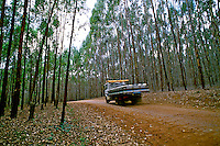 Estrada de terra em S. Bento Abade, Minas Gerais. 1999. Foto de Juca Martins.
