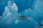 Chinstrap penguins rest on a sculpted blue iceberg of ancient compressed ice. Antarctica (digitally altered)