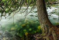 Creek & Cedar