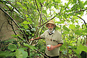Peter Emerson's garden, where is has five Figs trees growing in his Rhubarb Cottage garden in North Belfast Wednesday July 3rd, 2019. (Photo by Paul McErlane for the Belfast Telegraph)
