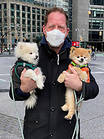 New York, New York City, in the time of Coronavirus. Man taking his pomeranian dogs out for a walk while wearing a facemask.