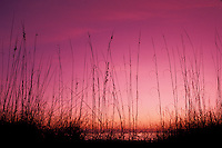sunrise, Cumberland Island, Georgia, GA, Sunrise over the Atlantic Ocean from Cumberland Island National Seashore.