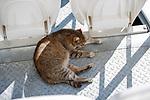29.08.2018 the Ufa cat