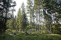 FOREST_LOCATION_90130