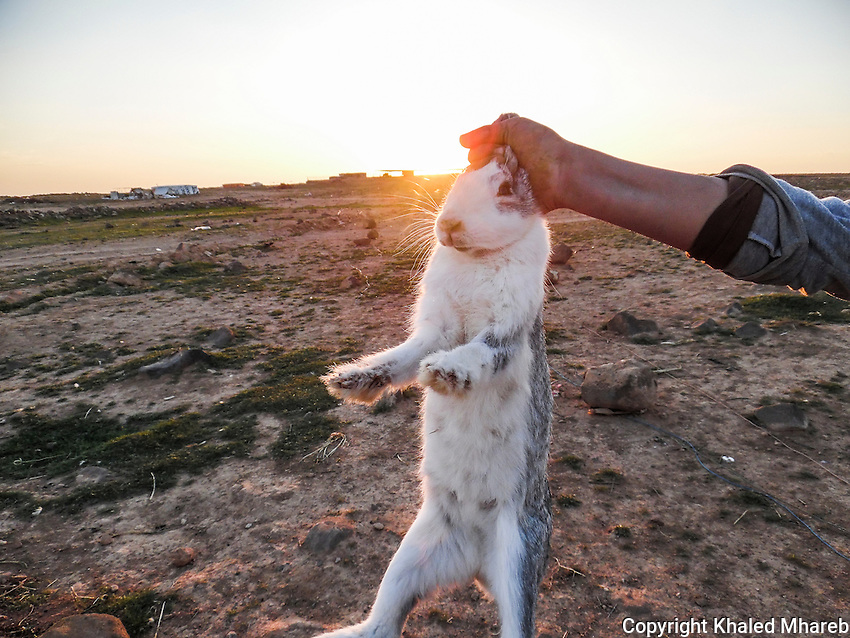 This is rabbit was in pain. Suffering because it was held by a human being. The human was holding it without pity. He saw it during the sunset. He held her and she felt pain. But she could not speak to describe her pain. The rabbit is a beautiful animal and does not hurt anyone.