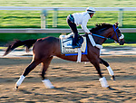May 15, 2019 : Signalman exercises as horses prepare for Preakness Week at Pimlico Race Course in Baltimore, Maryland. Scott Serio/Eclipse Sportswire/CSM