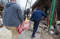 Workers carry a pig cut in two halves during a Pig killing in Hungary and meat processing event in Pomaz (about 20 kilometres North of capital city Budapest), Hungary on January 28, 2017. ATTILA VOLGYI