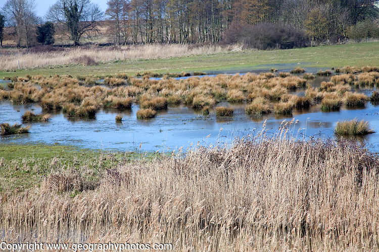 Wetland marsh and reed vegetation Hollesley Suffolk