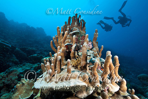 A bizarre coral formation with fantastic little spires, with divers in the background, Palau Micronesia. (Photo by Matt Considine - Images of Asia Collection) (Matt Considine)