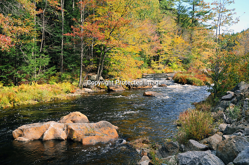 Ashuelot River in Colorful Foliage during Fall Season in Gilsum, New Hampshire USA
