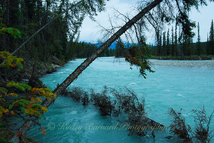 The beautiful Bow River in Jasper National Park Alberta Canada.