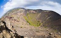 Pines grow in the crater of the volcano San Antonio close to the town of Los Canarios on the Canary Island of La Palma.