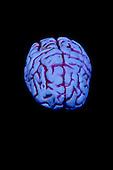 Stock photo of human brain