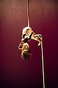 Edinburgh, UK. 12.08.2014.  NoFitState Circus perform their show BIANCO, in their Grand Chapiteau in Fountainbridge, to a rapt audience, at the Edinburgh Festival Fringe. Picture shows: Aerialist, Elena Burani. © Jane Hobson.