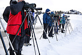USA, Wyoming, Yellowstone National Park, wolf-watchers line up on the side of Blacktail Plateau Drive to watch a pack, Blacktail Deer Plateau
