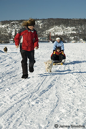 Young children being pulled on a sled by their pet dog
