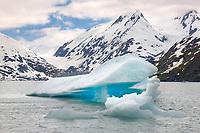 Glacier iceberg floats in Portage lake, southcentral, Alaska