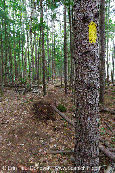 The Pine Island Trail in Lincoln, New Hampshire USA. In 2011, the Pine Island Trail was severely damaged from Tropical Storm Irene forcing it to be closed. In the summer of 2012, proper parties relocated the trail and it is now open for usage. Much of the trail had to be relocated because of the storm damage. This is a section of the new trail
