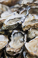 Europe/France/Aquitaine/33/Gironde/Bassin d'Arcachon/Arcachon: Brasserie:Chez Yvette- Huitres d'Arcachon