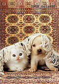 Xavier, ANIMALS, REALISTISCHE TIERE, ANIMALES REALISTICOS, cats, photos+++++,SPCHCATS891,#a#, EVERYDAY