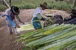 Cultivo de sisal em Valente. Bahia. 2004. Foto de Ubirajara Machado.