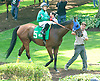 Willy d'Rocket before The Cape Henlopen Stakes at Delaware Park on 7/11/15