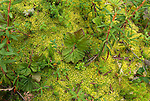 green ground cover. Leaves and moss