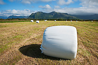 Hay bale on freshly cut field, Gimsøya, Lofoten islands, Norway