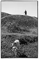 Uzbekistan - Aral Sea - A farmer walking his only goat around the Aral Sea.