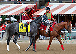 Tapwrit in the post parade as Yoshida (no. 1), wins the Woodward Stakes (Grade 1), Sep. 1, 2018 at the Saratoga Race Course, Saratoga Springs, NY.    Ridden by  Joel Rosario, and trained by William Mott,  Yoshinda finished 2 lengths in front of Gunnevera (No. 9). (Bruce Dudek/Eclipse Sportswire)