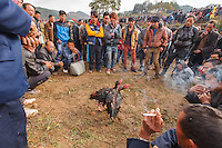 Asia,China, Guizhou,Gulong festival of Lusheng of Miao people,cockfight, ,China minority