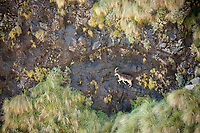 'The Rock Climber'<br />