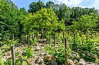 France, Indre-et-Loire (37), Amboise, château Gaillard, les vignes