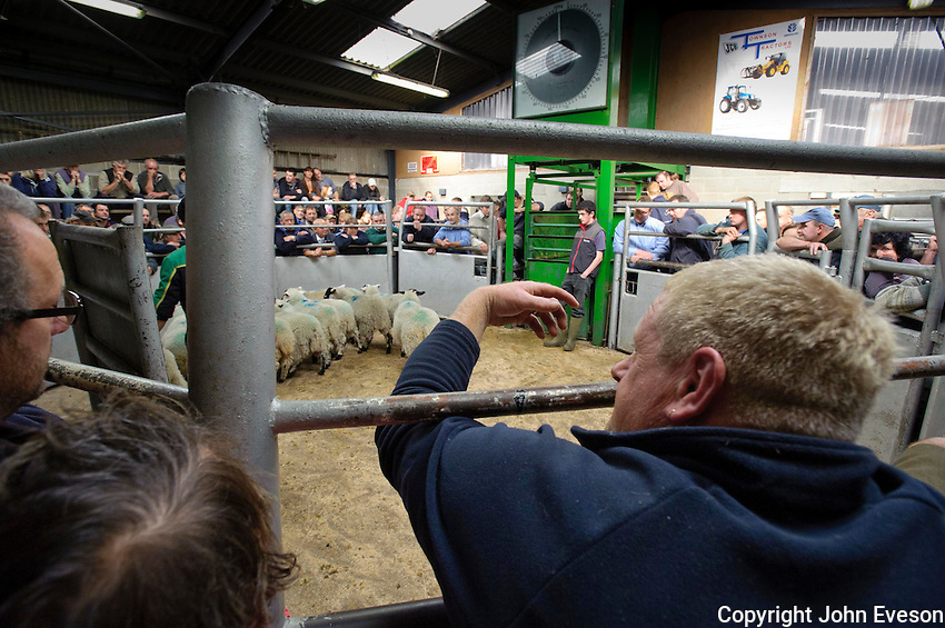 Bidding at the auction ring at Holmfirth Livestock Market, Yorkshire.