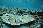 Croisière en hobbie cat aux Seychelles. Océan Indien