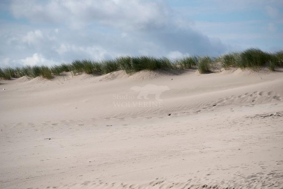 Jonge stuifduinen op de Maasvlakte