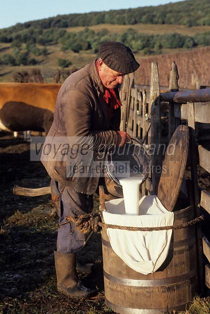 """Europe/France/Auvergne/12/Aveyron: Aubrac - Traite des vaches au buron de canut pour préparer la """"fourme de Laguiole"""" [Non destiné à un usage publicitaire - Not intended for an advertising use] <br /> PHOTO D'ARCHIVES // ARCHIVAL IMAGES<br /> FRANCE 1980"""