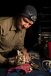 Black-footed Cat (Felis nigripes) biologist, Alex Sliwa, during collaring of male, Benfontein Nature Reserve, South Africa