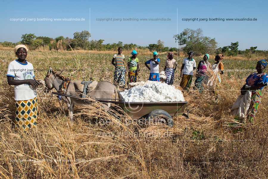 BURKINA FASO, village GOUMSIN near SAPONE, organic and fair trade cotton farming, manual harvest at farm of woman farmer HÉLÈNE KABRE, the harvested cotton is transported by donkey wagon to her village house / fair gehandelte Biobaumwolle, Ernte bei Kleinbaeuerin HÉLÈNE KABRE