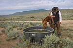A cowboy leads his horse to water during the annual Reno Rodeo cattle drive which brings the livestock for use in the rodeo into town.
