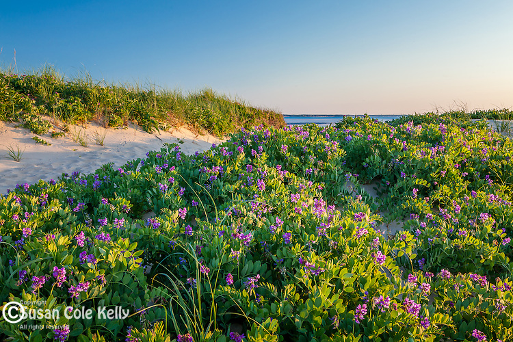 Sunset at First Encounter Beach in Eastham, Cape Cod, MA, USA